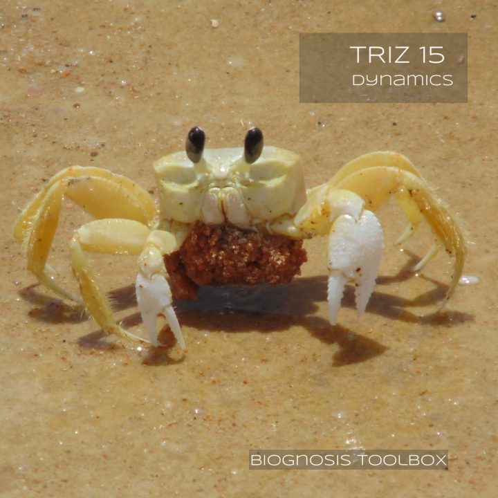 Biognosis CRAB (TRIZ 15 Dynamics)
