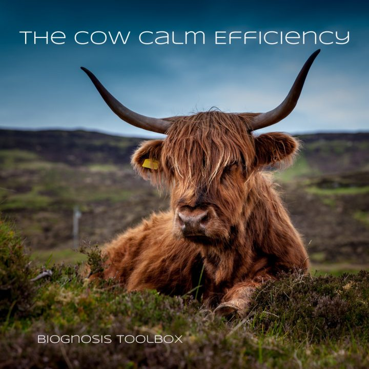 "Biognosis ""The Cow Calm Efficiency"""