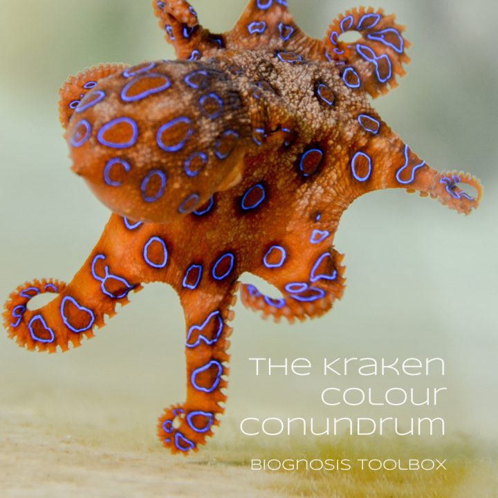 "Biognosis ""The Kraken Colour Conundrum"""