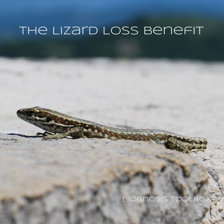 "Biognosis ""The Lizard Loss Benefit"""