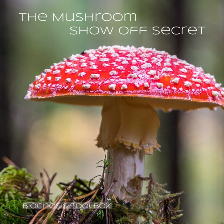 "Biognosis ""The Mushroom Show-Off Secret"""