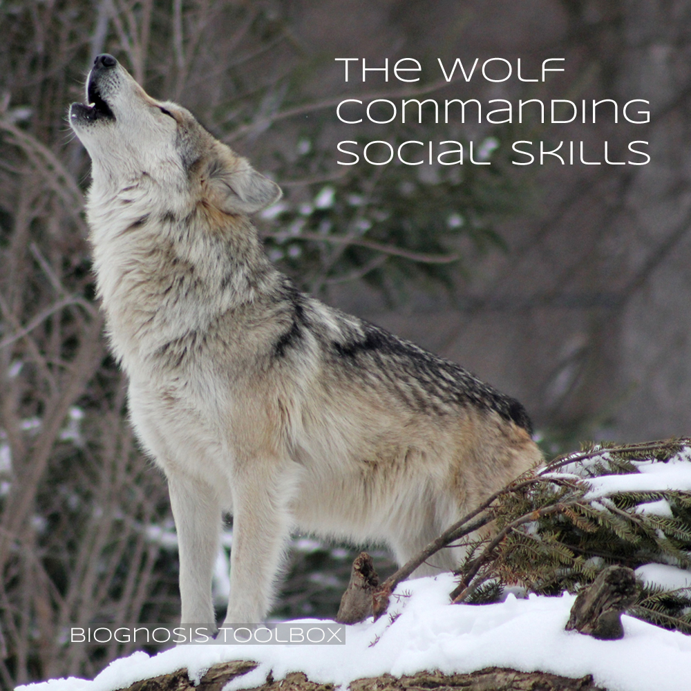 "Biognosis ""The Wolf Commanding Social-Skills"""