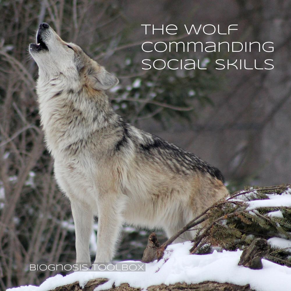 "Biognosis ""The Wolf Commanding Social-Skills"""
