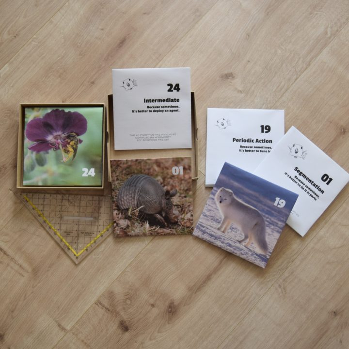Home-made prototype, showing a square cardboard box and three card examples - an armadillo, an arctic fox and bee in flower